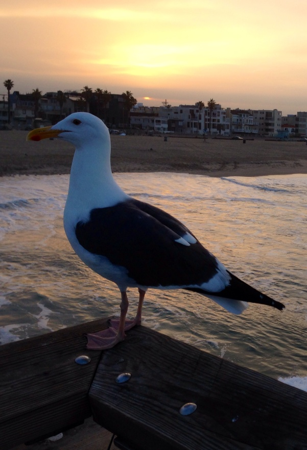 bird_venicebeach_og