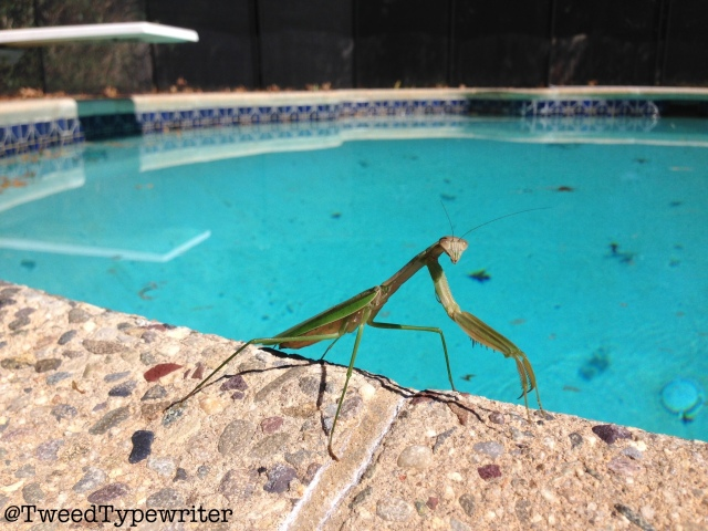 prayingmantis_pac_edit